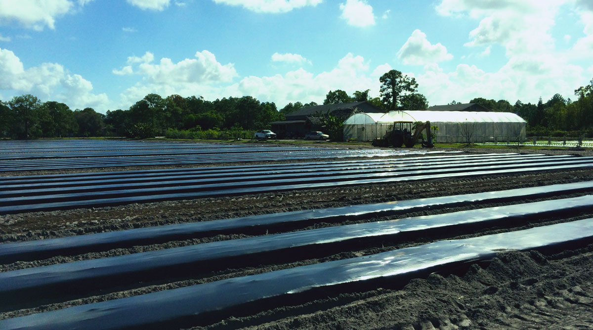 organic-farm-field-rows-naples-food-thought