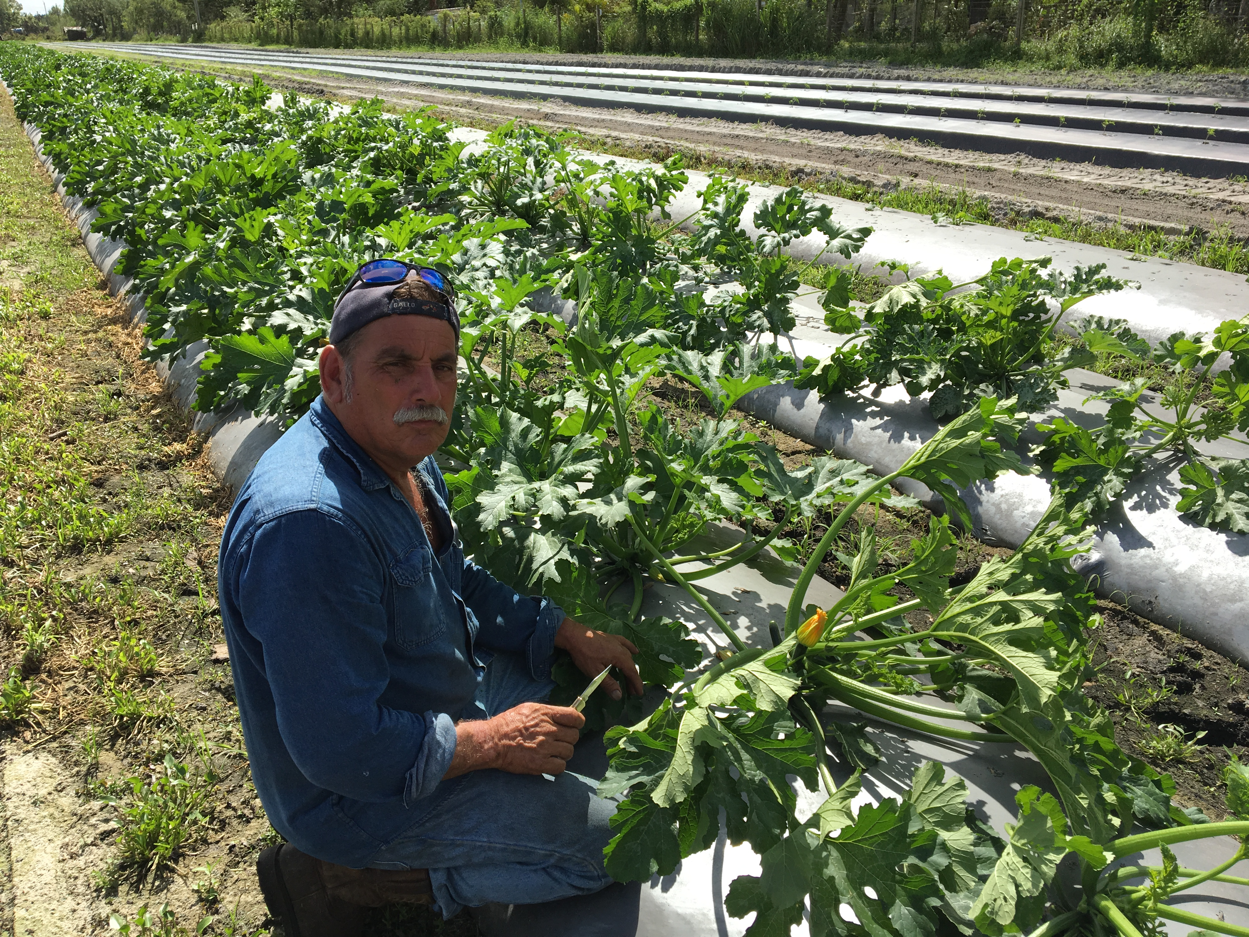 Food and Thought Open Barn – Organic Farm Tour